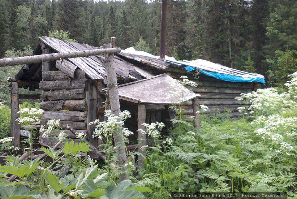 Поиск тайной базы атамана Соловьева, Siberian Expeditions. Избушка шишкарей