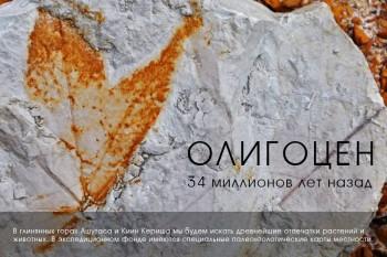 Отпечатки древних растений из Казахстана