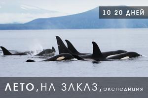 Экспедиция на Паамушир по наблюдению за китами
