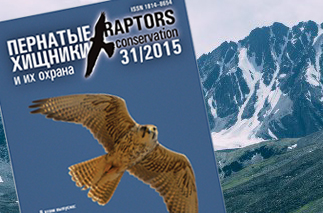 raptors-siberian-expeditions