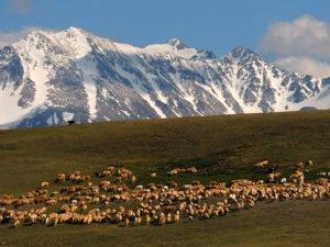 Западная Тыва Монгун-Тайга