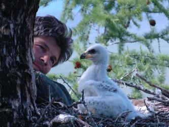 Кольцевание птенцов, Тыва