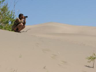 Пустыня, Тыва
