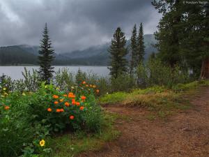 Ергаки, таёжные цветы