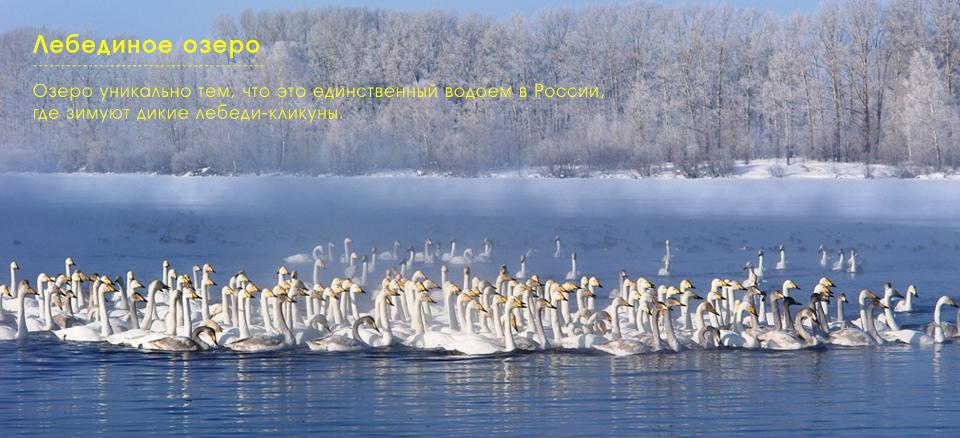 Лебединое озеро в Горном Алтае