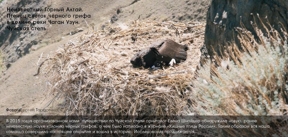 горный Алтай, Чаган-Узун, черные грифы