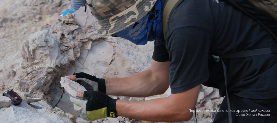 Отпечатки растений (эвкалипт, 37 млн лет назад), Восточный Казахстан