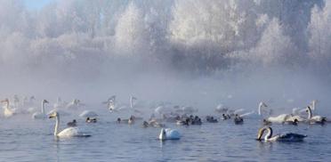 Новый Год на Горном Алтае 2016, Лебединое озеро