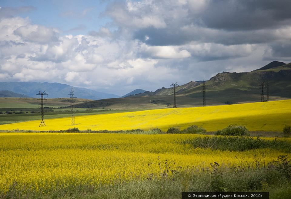 Восточный Казахстан, Алтай. Поля рапса.