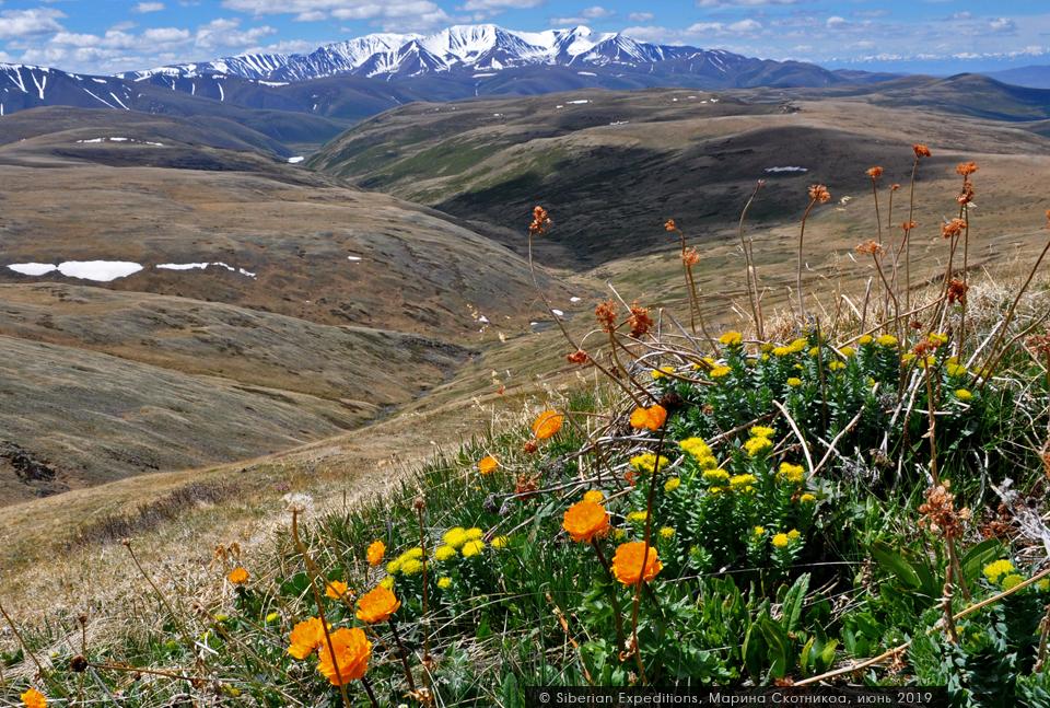 Первоцветы Алтая