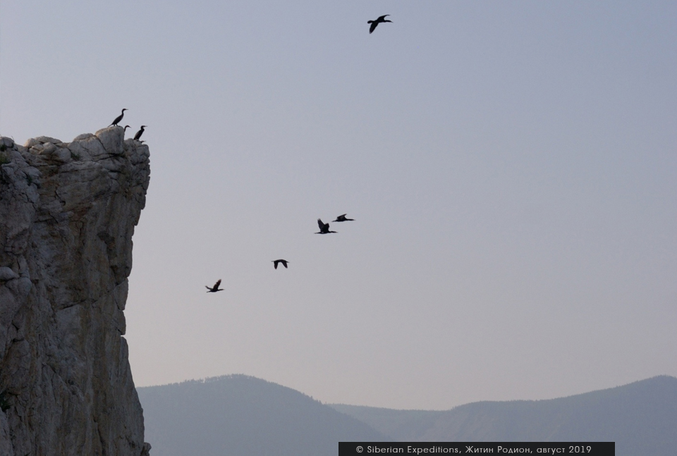 Бакланы на островах Малого Моря, Байкал