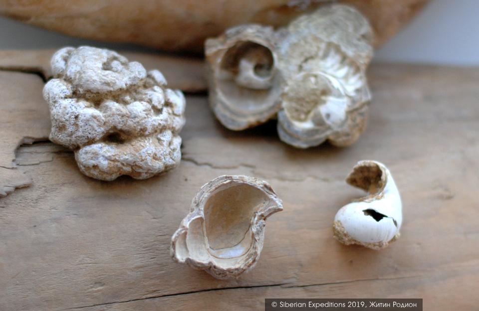 Марсианские пейзажи Алтая, строматолиты Чаган-Узуна и ископаемые моллюски