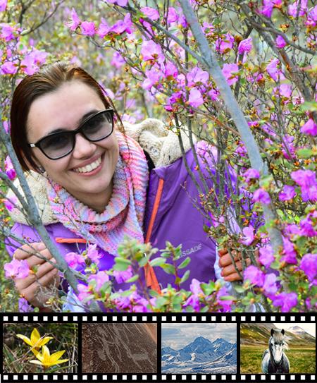 Весенний Алтай, цветение маральника